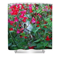 Shower Curtain featuring the photograph Garden Spider  by J L Zarek