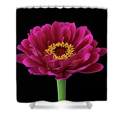 Garden Zinnia Shower Curtain