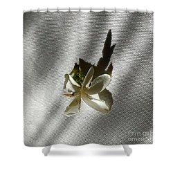 Gardenia On Tablecloths  Shower Curtain