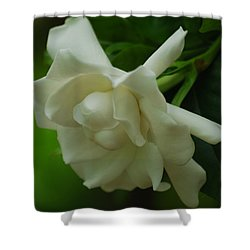 Shower Curtain featuring the photograph Gardenia by Ramona Whiteaker