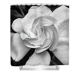 Gardenia The Scent Of The South Shower Curtain