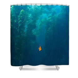 Garibaldi Fish In Giant Kelp Underwater Shower Curtain by James Forte