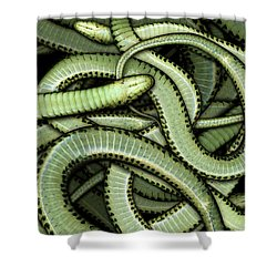 Garter Snakes Pattern Shower Curtain
