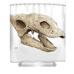 Gastonia Burgei Skull Shower Curtain