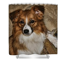 Gater Attention Shower Curtain