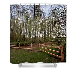 Gates To The Birch Wood Shower Curtain by Eti Reid
