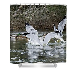 Shower Curtain featuring the photograph Gathering Of Egrets by George Randy Bass