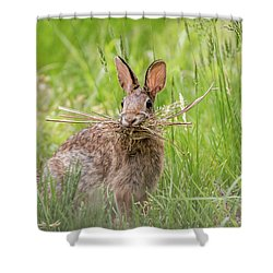 Gathering Rabbit Shower Curtain by Terry DeLuco