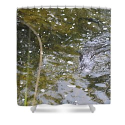 Gator Coming Shower Curtain