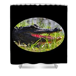 Shower Curtain featuring the photograph Gator Grin .png by Al Powell Photography USA