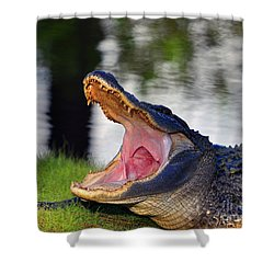 Shower Curtain featuring the photograph Gator Gullet by Al Powell Photography USA