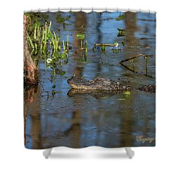 Shower Curtain featuring the photograph Gator In Cypress Lake 3 by Gregory Daley  PPSA