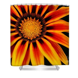 Gazania L Shower Curtain