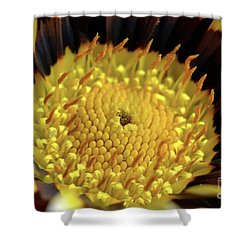 Gazania Macro Shower Curtain by Baggieoldboy
