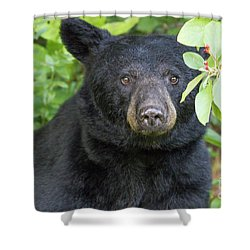 Gazing Black Bear Shower Curtain