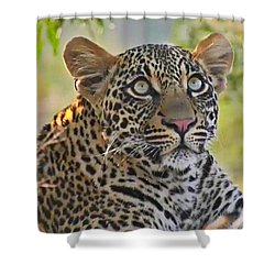 Gazing Leopard Shower Curtain