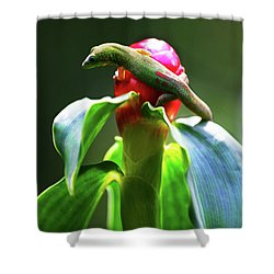 Shower Curtain featuring the photograph Gecko #3 by Anthony Jones