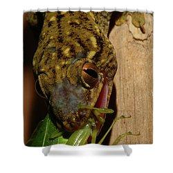 Gecko Feed Shower Curtain
