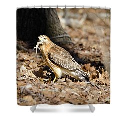 Shower Curtain featuring the photograph Gecko For Lunch by George Randy Bass