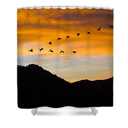 Shower Curtain featuring the photograph Geese At Sunrise by Shane Bechler