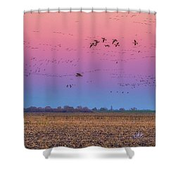 Geese Flying At Sunset Shower Curtain