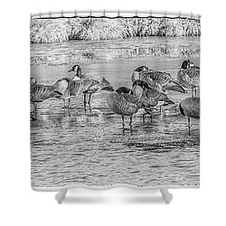 Shower Curtain featuring the digital art Geese On Frozen Lake by Randy Steele