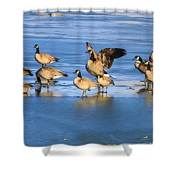 Geese On Ice Shower Curtain by Juli Ellen
