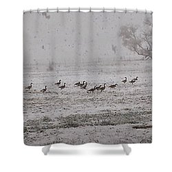 Geese Walking In The Snow Shower Curtain