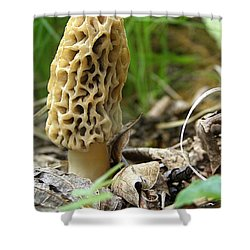 Gem Of The Forest - Morel Mushroom Shower Curtain by Angie Rea
