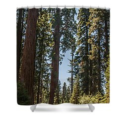 General Grant Tree Kings Canyon National Park Shower Curtain