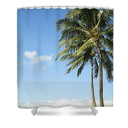 Generic Palm Tree Shower Curtain by Brandon Tabiolo - Printscapes