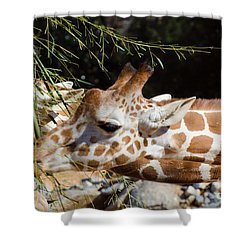 Gentle Beauty Shower Curtain by Donna Brown