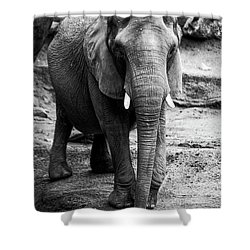 Shower Curtain featuring the photograph Gentle One by Karol Livote