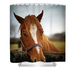 Shower Curtain featuring the photograph Genuine Reward by Shane Holsclaw