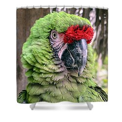 George The Parrot Shower Curtain