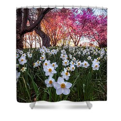 Shower Curtain featuring the photograph White Daffodils by Mark Papke