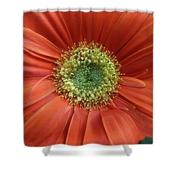 Gerber Daisy Shower Curtain by Geraldine Alexander