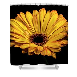 Shower Curtain featuring the photograph Gerber Daisy by James Sage