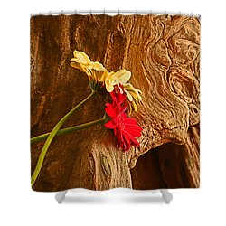 Gerber Daisy On Driftwod Shower Curtain