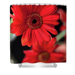 Gerbera Shower Curtain by Amanda Barcon