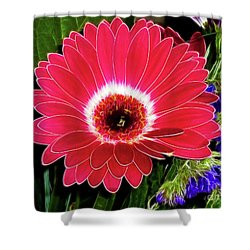 Gerbera Bella Shower Curtain by Mariola Bitner