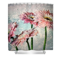 Gerbera Daisies With A Splash Shower Curtain