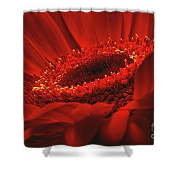 Shower Curtain featuring the photograph Gerbera Daisy In Red by Sharon Talson