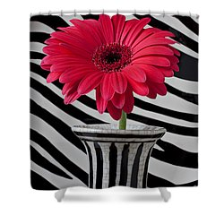Gerbera Daisy In Striped Vase Shower Curtain by Garry Gay