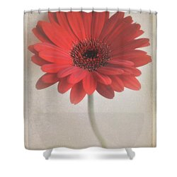 Shower Curtain featuring the photograph Gerbera Daisy by Lyn Randle