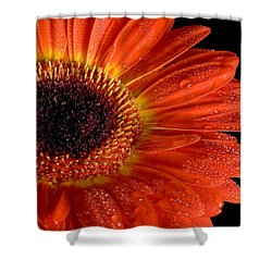 Gerbera I Shower Curtain