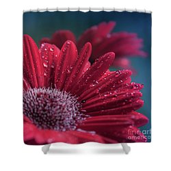 Shower Curtain featuring the photograph Gerbera Red Jewel by Sharon Mau