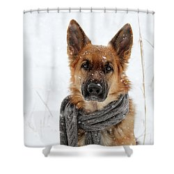 German Shepherd Wearing Scarf In Snow Shower Curtain