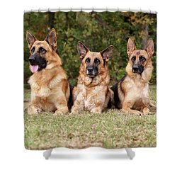 German Shepherds - Family Portrait Shower Curtain by Sandy Keeton