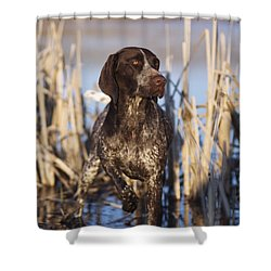 German Shorthair On Point -  D000897 Shower Curtain